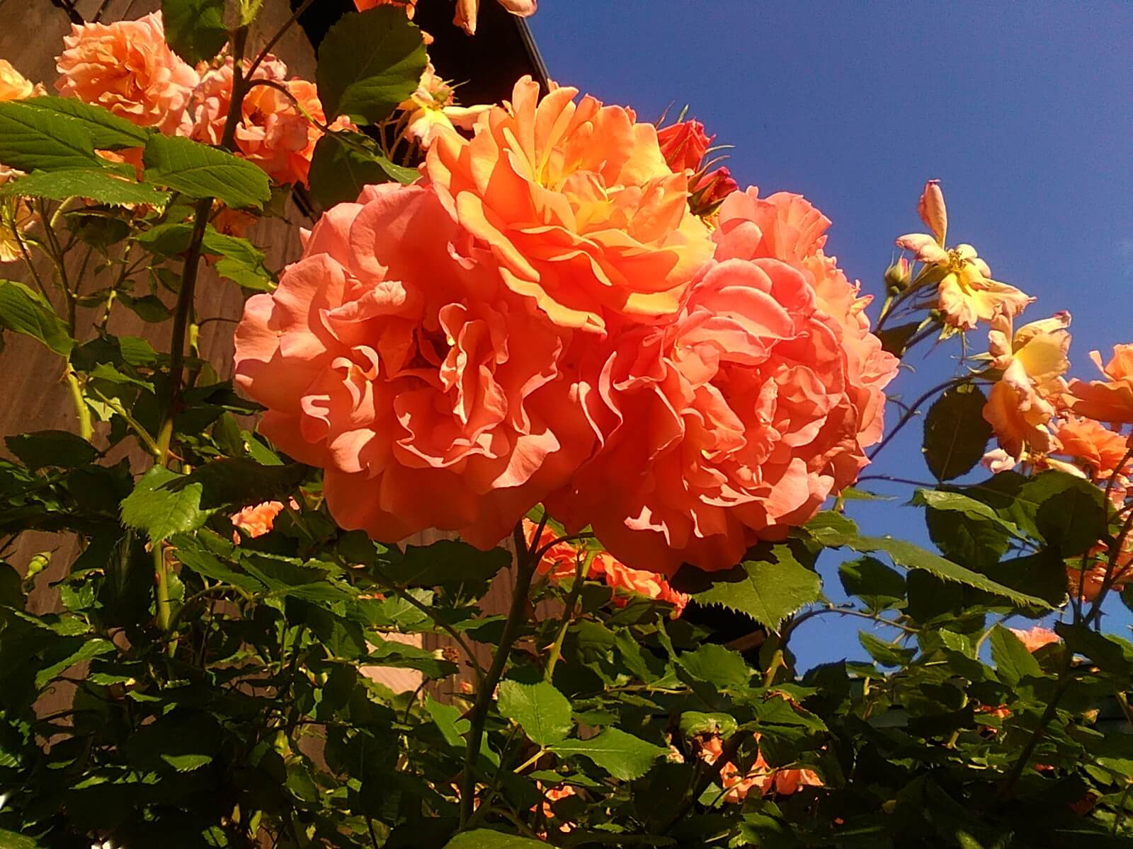 Blumen auf dem Daurerhof Aschau im Chiemgau